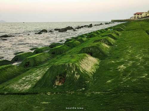 cửa đại rêu xanh