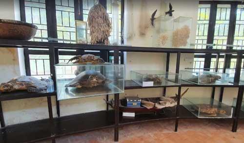 bảo tàng biển cù lao chàm