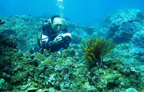 lặn ngắm san hô bằng bình dưỡng khí